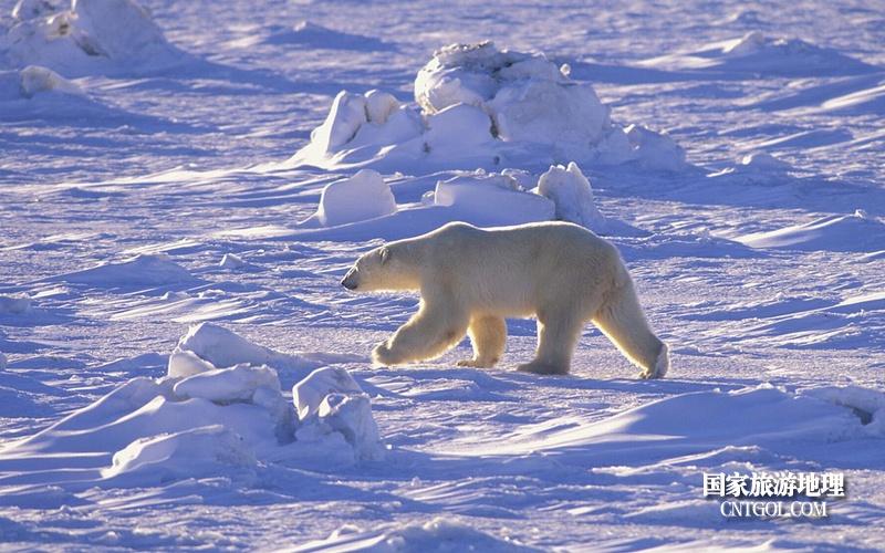 北极熊恋人湾海豚珊妮的扮演者是谁图片
