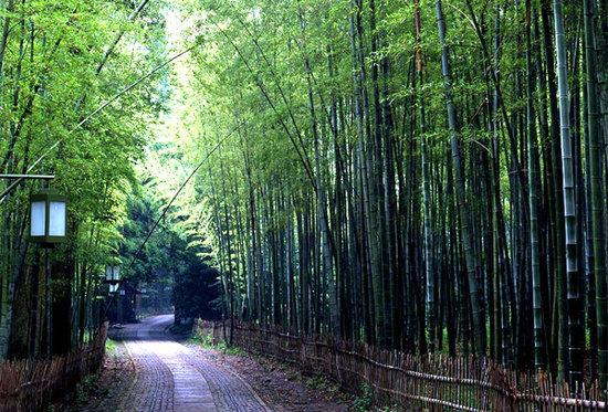 另类游西湖 杭州十条最美的徒步路线