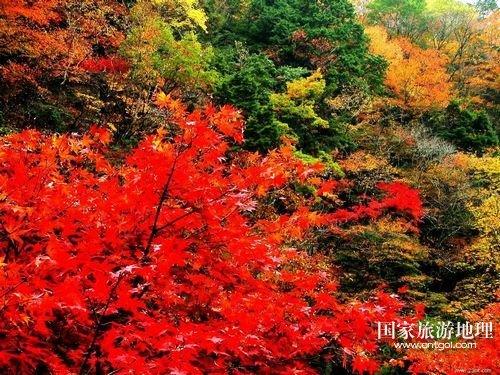 熊熊的红叶,如榴火,如玛瑙,如琥珀,如珊瑚hhh我从未看到过有这图片