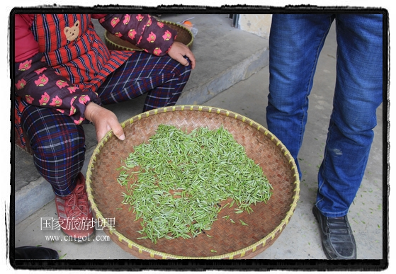婺源县茶业局积极组织茶技人员到中云、镇头、清华、思口等重点产茶乡镇,深入茶园地块、名优茶加工厂开展技术服务。