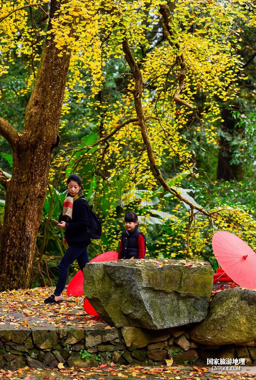12月初,婺源篁岭枫叶进入最佳观赏期,枫期较其他地方晚一些。晒秋和红枫掩映在粉墙黛瓦之间,构成一幅美丽动人的山村水墨画,令人赏心悦目,美不胜收。