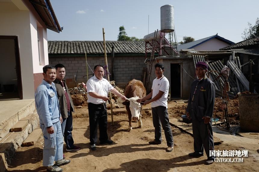 去年德宏驻村工作队给对口帮扶勒通山、勒通坝、行恒坝、南旦坝的建卡立档户发放了猪、牛。其中31户每户分到2头牛,110户每户分到3头猪。勒通山村民小组的董勒兰很高兴自己家能分到了欧盟进口的两头西门塔尔牛。