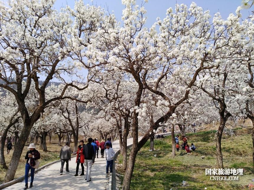 1 云南会泽水城梨园春天的乐园