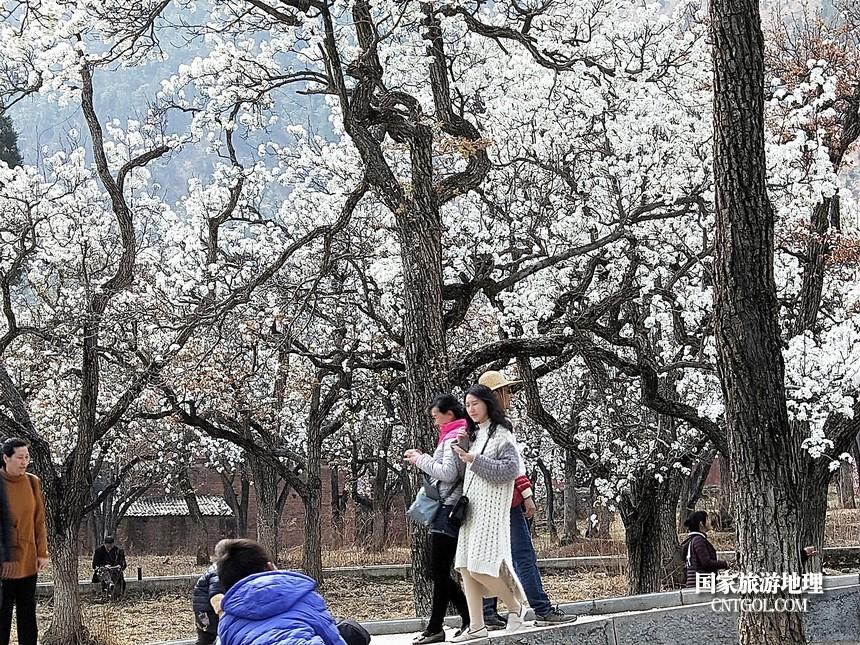 7 云南会泽水城梨园春天的乐园