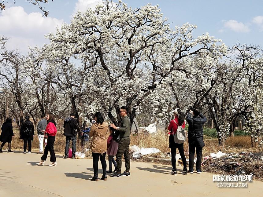10 云南会泽水城梨园春天的乐园