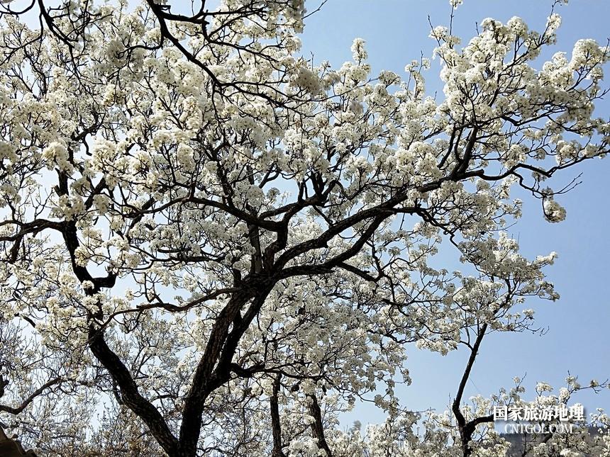 12 云南会泽水城梨园春天的乐园
