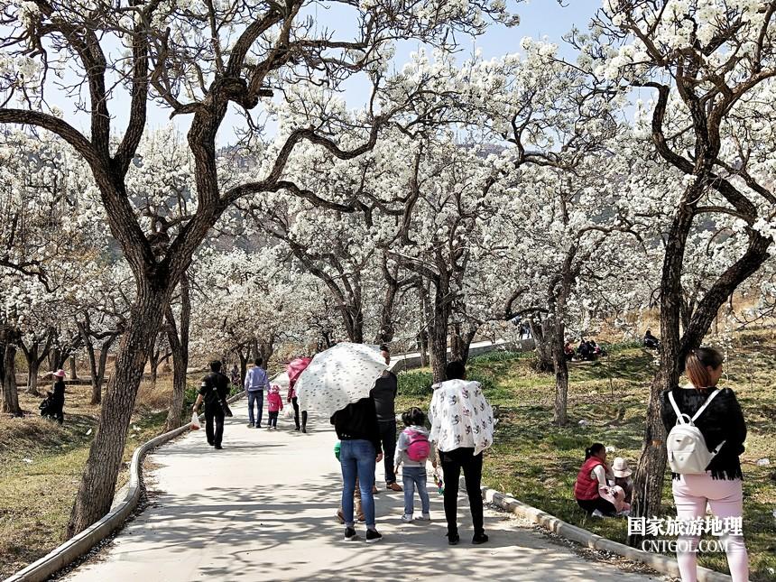 14 云南会泽水城梨园春天的乐园