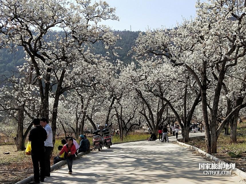 15 云南会泽水城梨园春天的乐园