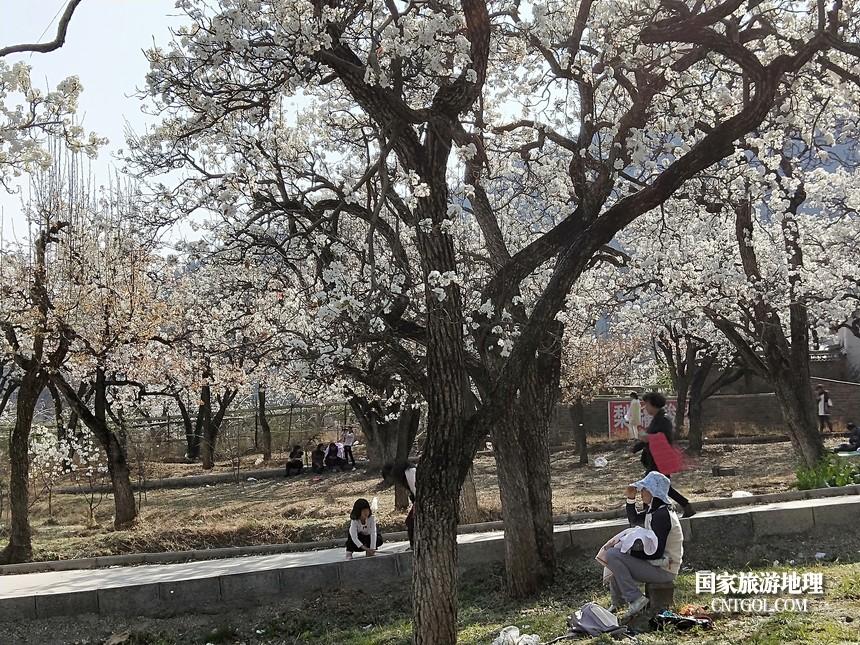 17 云南会泽水城梨园春天的乐园