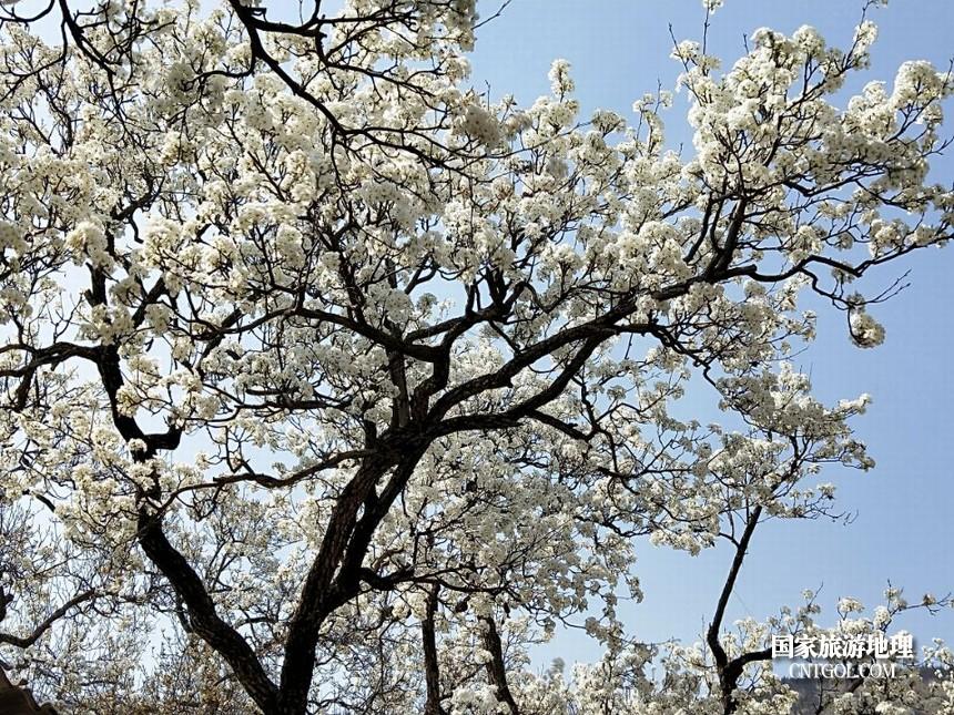 24 云南会泽水城梨园春天的乐园