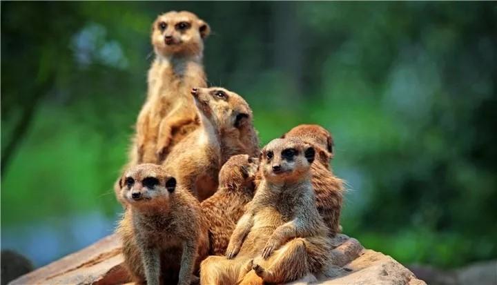00从长隆野生动物世界南门入园,小朋友们最爱的动物像火烈鸟,山魈,獴