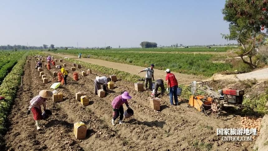 上午11点,早起的芒崃村村民们已经将自家收获的土豆打包放在袋子里,准备发往外地。