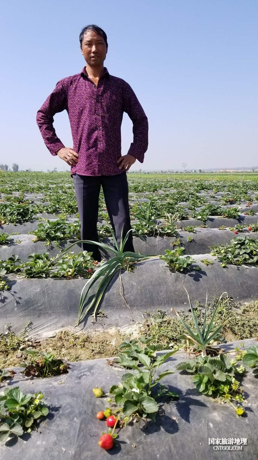 家住德宏梁河县的徐光钱每年秋冬便来到芒赛村承包农田种植草莓。三月草莓成熟后,他又要回梁河种植核桃、草果、杉木。