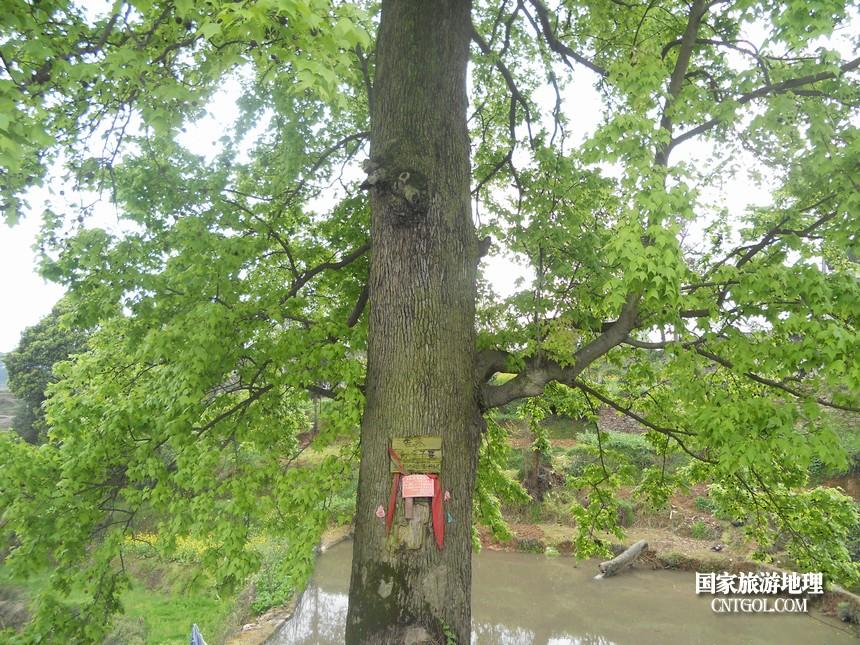 古树身份证,保护制度化