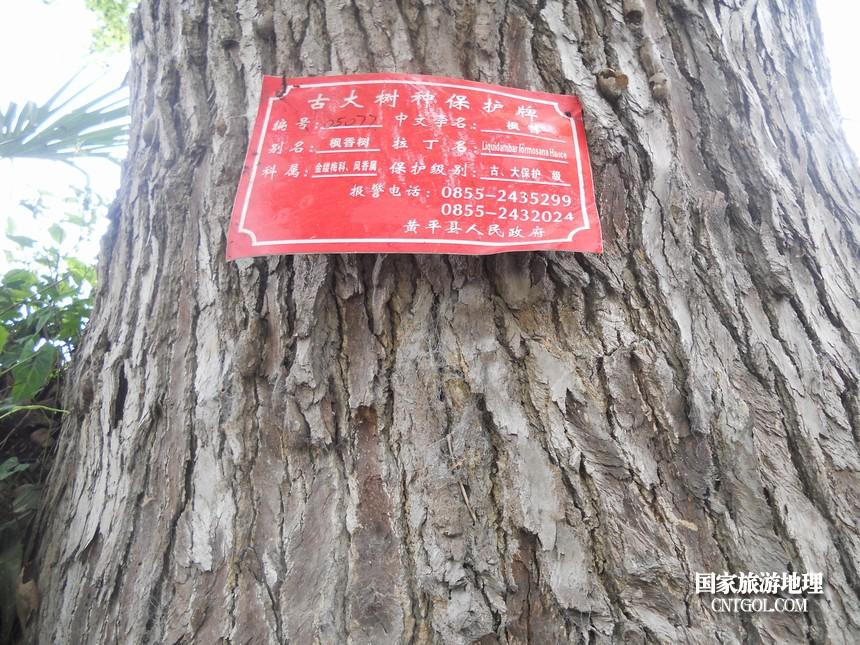 政府挂牌,对树的情况进行管理