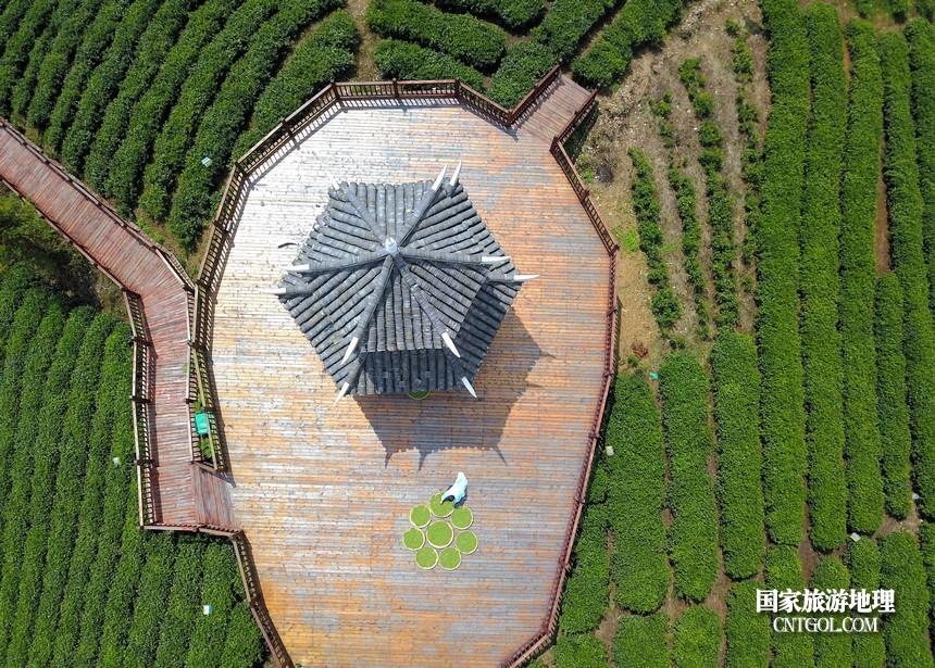2018年4月1日,航拍下茶农在贵州贵定县云雾镇鸟王村老茶坡茶园采摘云雾贡茶。