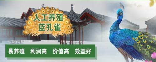 凤凰文化蓝农村v文化新型胸牌孔雀争当领头致富滴胶项目图片