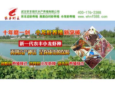 农丰虾王小龙虾养殖亩产量高  免费上门技术指导脱贫致富