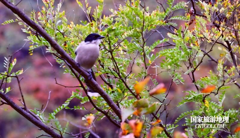 登珏山一路观赏鸟儿_啾声不断。
