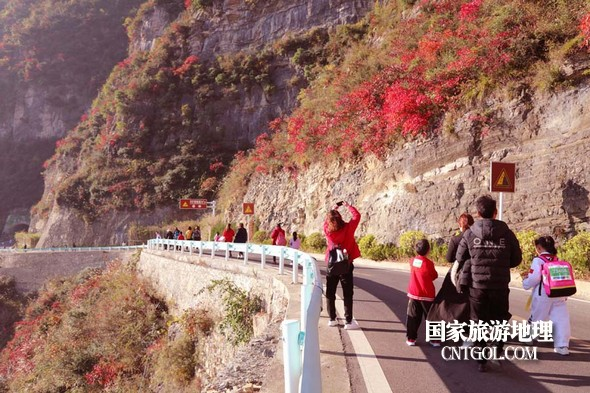 图6:巫山国际越野赛选手边跑边赏红叶拍照