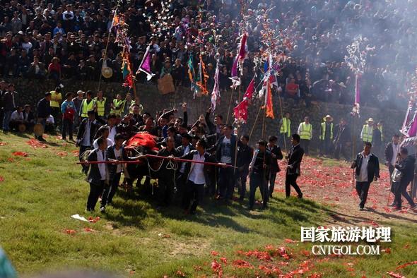 11月3日,贵州省从江县下江镇巨洞斗牛塘40头牛王争霸,图为牛王战胜的喜悦场面。