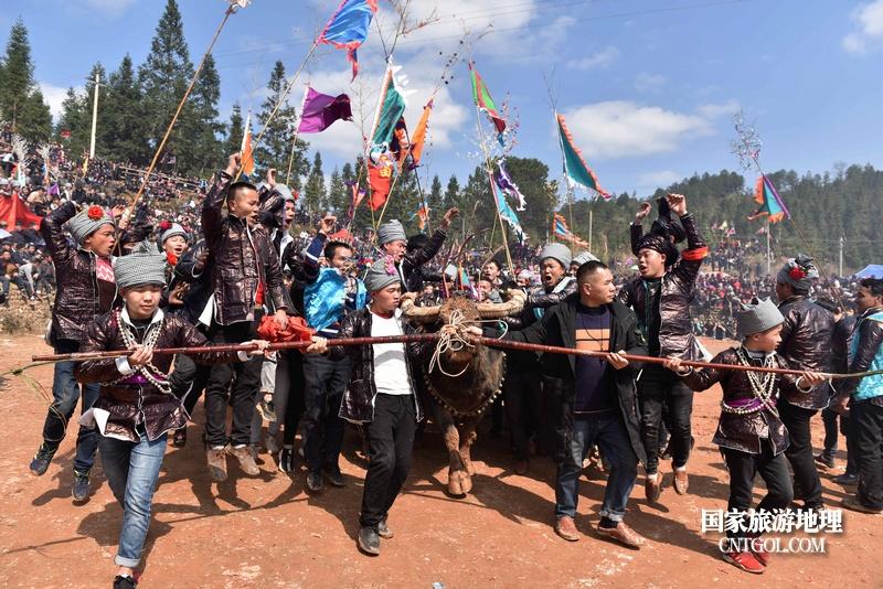 人们在贵州省从江县高增乡岜扒村斗牛塘观看传统闹春耕斗牛活动。牛王战胜后的热闹场面(龙梦前摄)