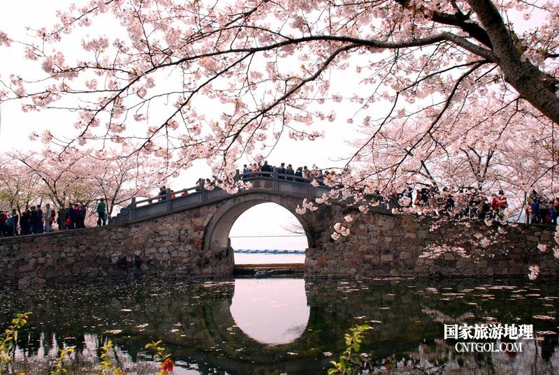 太湖鼋头渚长春桥樱花与游人们