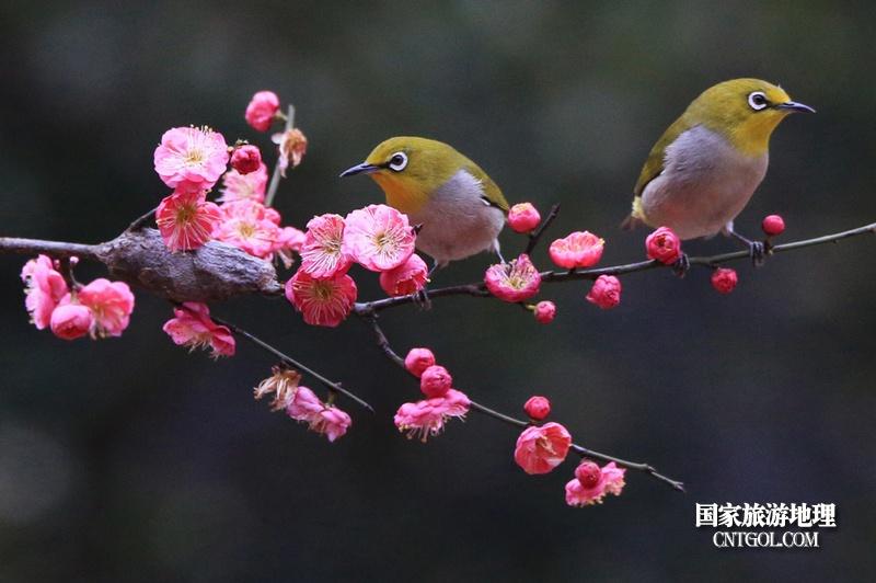 小鸟与花儿