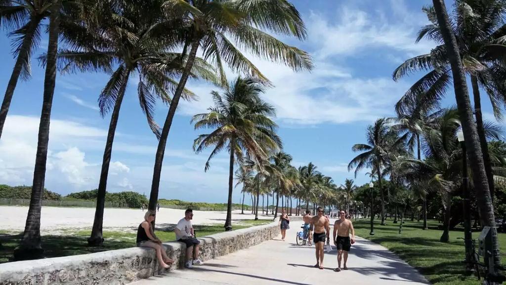 佛罗里达海滨度假天堂/椰树下休闲的人们