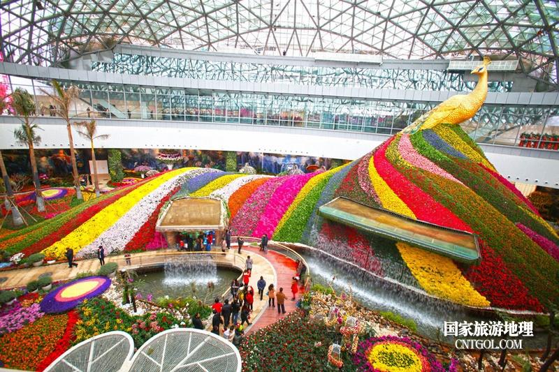 云南昆明春城无处不飞花/美丽的花之城