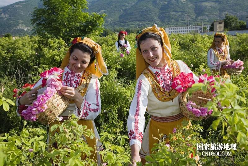 在那玫瑰花盛开地方保加利亚/采玫瑰的姑娘