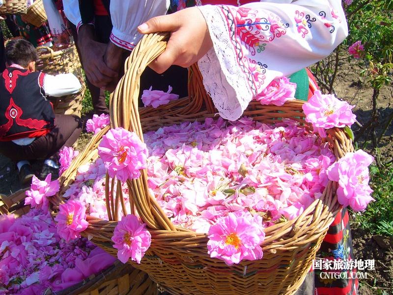 在那玫瑰花盛开地方保加利亚/玫瑰花蓝