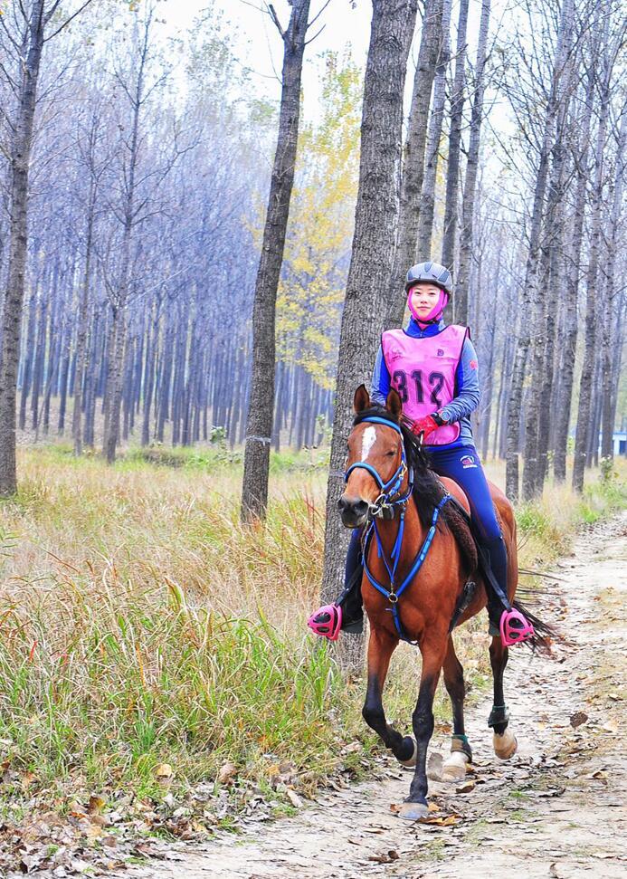 >>国际三星级马术耐力赛在中国砀山举行中国内地首位三星级女骑手诞生