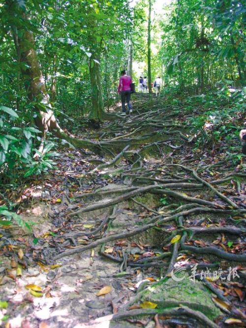 马来西亚勇探原始大森林 朝拜存活百万年的森林