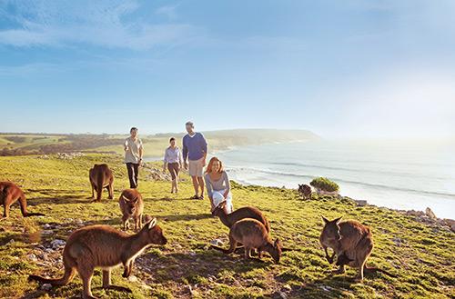 纯净的澳大利亚袋鼠岛 和谐自然中的极致乐趣