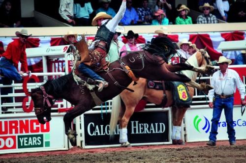 难忘的落基山之旅 感受激情四射的牛仔竞技
