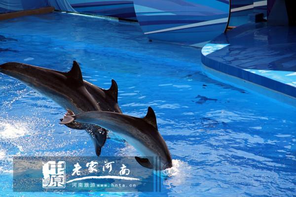 极地过六一,开封东京门票海洋馆攻略免费送(3锦绣中华一日游全民图片
