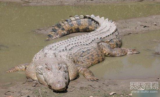 称霸地球:世界上最重的十大爬行动物