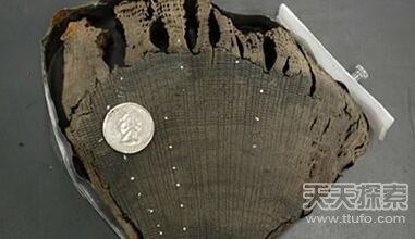 十大最酷的考古发现 潜水发现最早美洲人骨骼