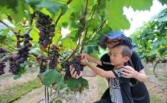 连城揭乐乡发展观光农业推进乡村旅游