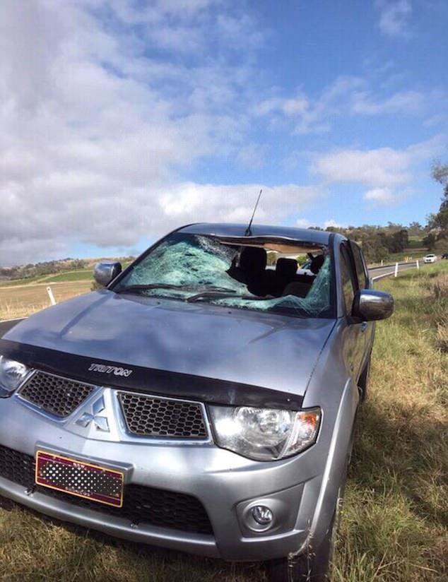 澳袋鼠撞坏汽车挡风玻璃葬身后座 司机逃过一劫