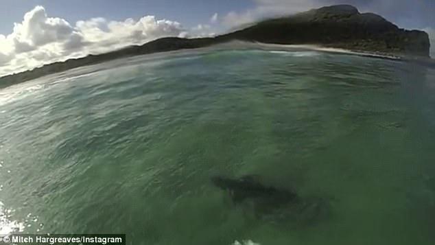 惊险!澳19岁少年海上冲浪遇鲨鱼随行