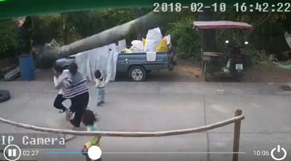 惊险!泰国街头一老树突然倒向小孩险酿悲剧
