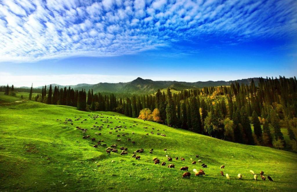 """蓝天·白云·美丽的那拉提草原——""""五一""""小长假那拉提景区圆满收官"""