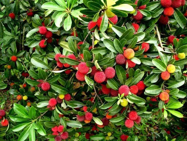走!这些好吃的水果在贵州都能摘!