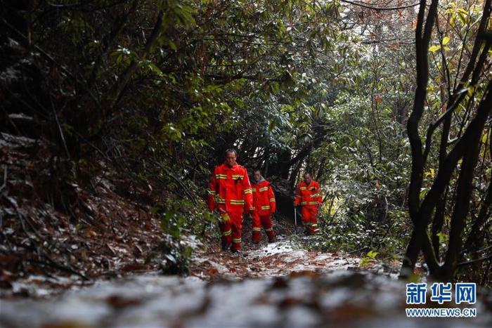 贵州毕节:护林三兄弟_最新林业信息