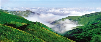 惠州市大亚湹�k�c._环境治理和野生动植物保护行动,努力构建科学规范,分类合理,管理有效