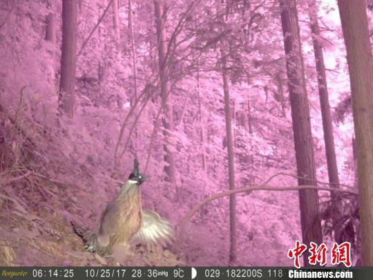 浙江柯城首次拍到黑麂等珍稀野生动物影像_最新林业信息