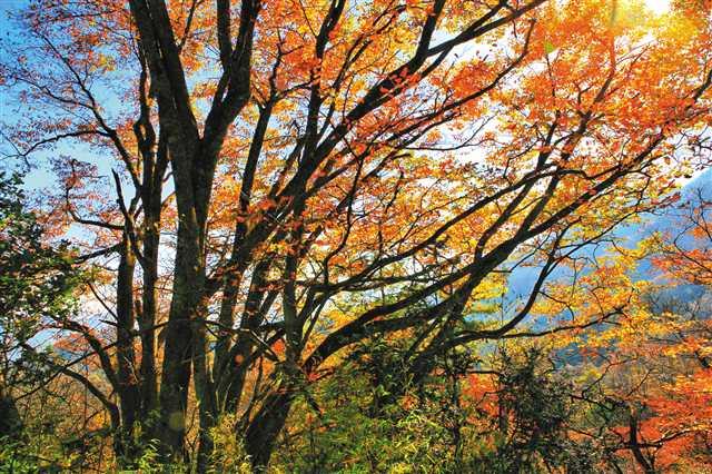 巫溪 做活生态林业大文章 奏响绿色发展协奏曲_最新林业信息