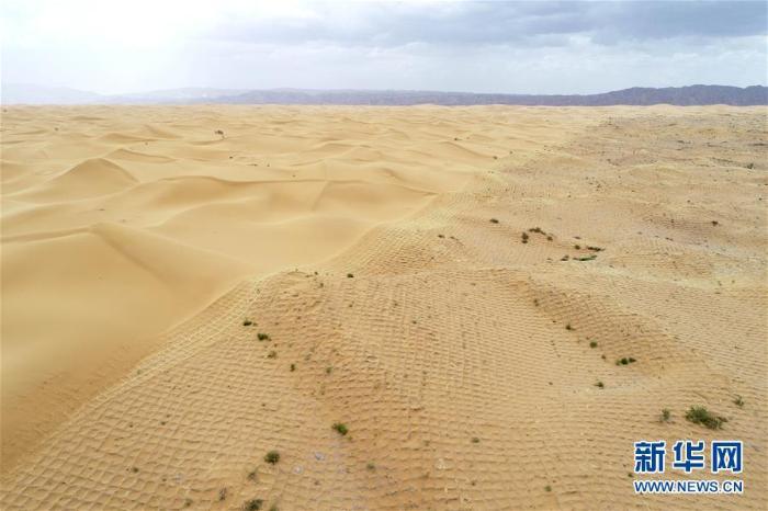 宁夏中卫:草方格扎出的沙漠绿意_最新林业信息